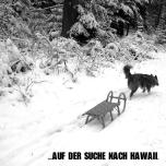 shout_hawaii_schlitten